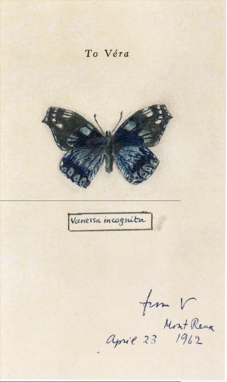 """how butterfly genitalia inspired nabokov s masterpieces facts so  """"vanessa incognita """"glenn horowitz bookseller permission of the wylie agency llc"""